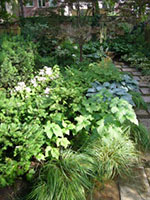 shade planting of Blue Oat Grass, Japanese anemones and Hydrangea